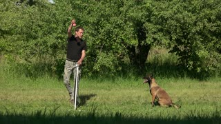 Hanging ball over obstacle, jumping dog. Man is making his dog jump over agility bar jump by using hanging ball, slow motion.