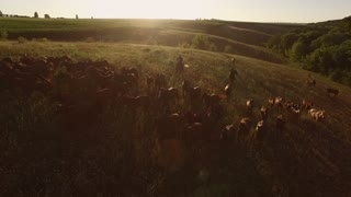 Herd and men on horses. Bright sun and clear sky. Summer in the countryside. Aerial view of moving herd.