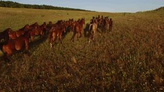 Herd of brown horses. Blue sky over horizon. Love to freedom. Feel no boundaries.