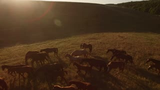 Herd of horses is galloping. Grassy hill and sun. Never late to change direction. Trust your instincts.