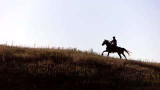 Horse rider is moving fast. Horseman on sky background. Stallion is trained for racing. Trotter of Spanish breed.