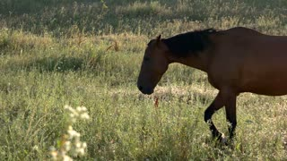 Horse walking on meadow. Hoofed animal on grass background. Strength and pride. Stay wild at heart.