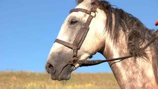 Horseman starts moving. Man pulls the reins. Off we go. Run, baby, run.