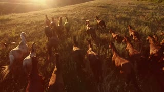 Horses are galloping. Aerial view of moving horses. We are the wild force. Home is where freedom dwells.
