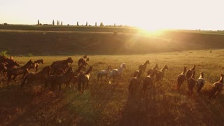 Horses are running. Aerial view of horse flock. Forget about the boundaries. Power and absolute freedom.