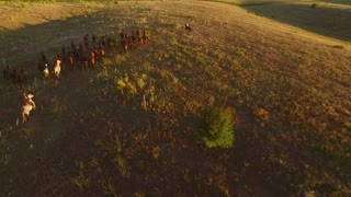 Horses are running on grass. Aerial view of galloping horses. Follow the goal. Wildness and beauty.