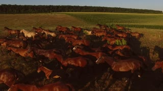 Horses galloping on meadow. Large group of hoofed animals. Chasing the dream. Have hope and strength.