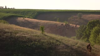 Horses running on hill. Group of animals outdoor. Fast hanoverian horses. Territory for grazing near village.