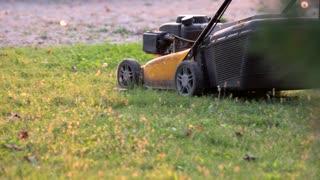 Lawn mower in motion. Green grass under sunlight. Buy gardening equipment.