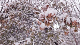 Leaves in the snow. Branches covered with snow. Snowy forest. Winter park.