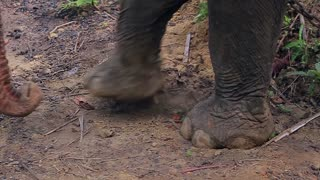 legs of elephant in countryside on chain