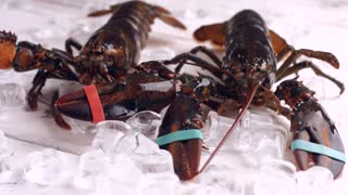 Live lobsters moving around. Brown lobsters beside ice cubes. Freedom is so close. Fast movements of sea creature.