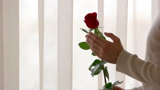 Male hand and red rose. Man touching a flower. First date gift.