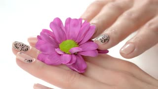 Manicured hand gently touching flower. Beautiful female fingers with perfect nails design touching petals of little pink chrysanthemum. Feminine care and delicacy.