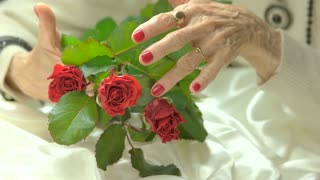 Manicured hand gently touching roses. Fresh red roses in senior woman well-groomed hands with red manicure. Skin love and care.