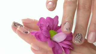 Manicured hands gently touching flower. Close up female hands with stylish nail design caress pink little chrysanthemum, slow motion.