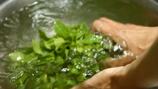 Man's hands washing mint. Mint in clean water. Fresh homegrown greenery. Mother nature feeds us well.