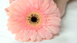 Movement of gerbera on manicured hand. Female hand with beautiful manicure and gentle motion of gerbera flower. Tenderness and beauty concept.