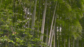 Nature and bench. Tall bamboo trees. Summer in China.