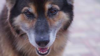 nice and good mongrel dog