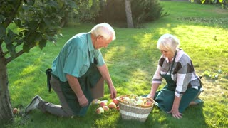 Old gardeners couple, apple basket. People on green grass. Useful advice for gardeners.