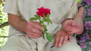 Old hands. Hands of the old people. Grandpa gives a rose his grandma.