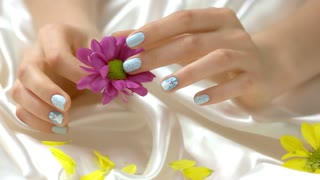 Pink chrysanthemum in manicured hands. Young woman hands with beautiful winter manicure gently touching little flower on white silk background.