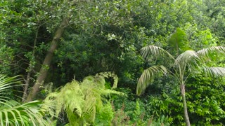 Plants and rock. Beautiful lush greenery. Information on rainforests.