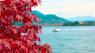 Red maple leaves, scenic landscape. Lake and mountains, sunny day.