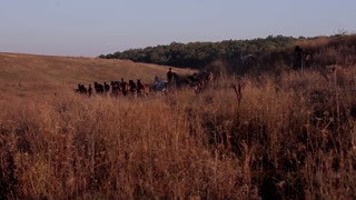 running horses on field at sunset
