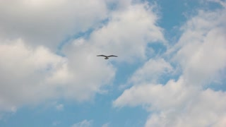Seagull flying in slow motion. Bird in the sky. Through the clouds.