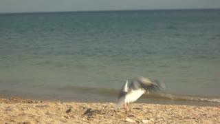 Seagull taking off. Bird on horizon background. Aspiration to freedom.