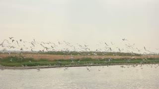 Seagulls flying in slow motion. Gulls, water and sky. Bird species in the world.