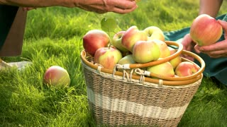 Senior hands and fruits. Apple basket on grass. Gardening as home based business.