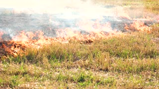 Spreading wildfire on grass. Close up. Destructive fire in dry agriculture field in drought.