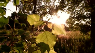 Sun shining on tree leaves. Nature at daytime. Find the harmony. Let your mind rest.