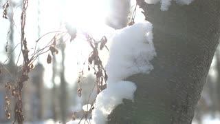 Tree bark and snow macro. Winter, bright sunlight.