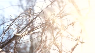 Tree branches, snow and sunlight. Winter morning, bright sun.