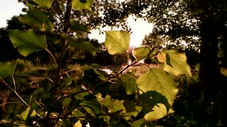 Tree leaves in sunlight. Nature and bright sun. Quiet and peaceful place. Where to hide from bustle.
