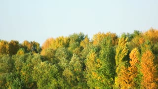 Trees and blue sky landscape. Green and yellow leaves on trees.