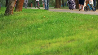 Urban park lawn, close up. People walking and strolling in a park.