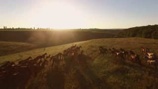 View of horses from air. Bright sun in the sky. Rider follows the herd. Path leads to freedom.