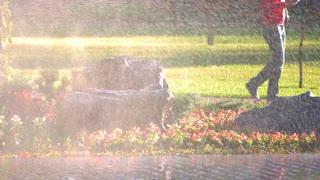 Water splashing in the garden park. Water sprinkler, pavement, flowers, grass and rocks.