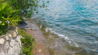 Waves on lake shore, summer. Water and green plants.
