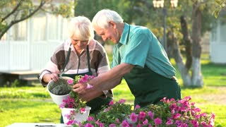 Woman and man transplanting flowers. Smiling old couple outdoors. Turn hobby into a business.