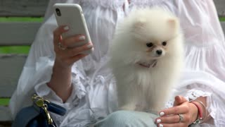 Woman with smartphone and white hairy dog. Hairy chihuahua an her master sitting on bench.
