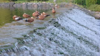 Water and birds. Motion of a small waterfall. Summer in nature reserve.