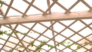 Wooden pergola roof. White planks and green leaves. Patio in the garden.