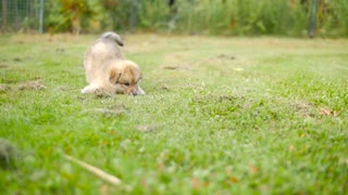 Adorable Puppy Dog Outside On Grass Running And Playing 2
