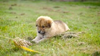 Adorable Puppy Dog Outside On Grass Trying To Attack